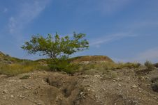 Free Desert Tree In The Badlands Stock Photos - 15852613