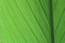 Free Closs Up Green Leaf Royalty Free Stock Photo - 15852745