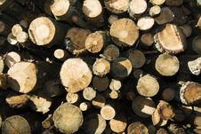 Free The Cut Down Trees Stock Images - 15853674