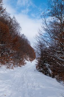Path In Forest In Winter Stock Photos