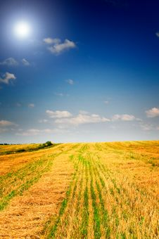 Free Mown Field Of Wheat. Royalty Free Stock Photos - 15853928