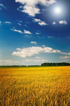 Free Amazing Yellow Field Of Wheat. Stock Photo - 15853960