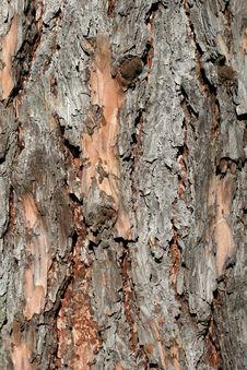 Free Tree Bark Royalty Free Stock Photos - 15854098