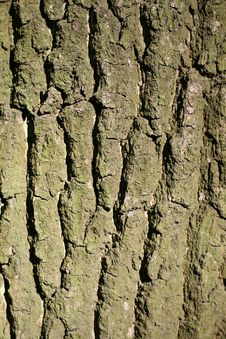 Free Tree Bark Royalty Free Stock Images - 15854119