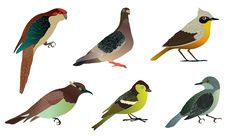 Set Of Different Birds. Royalty Free Stock Image