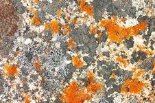 Free Lichen On A Stone Royalty Free Stock Photo - 15857735