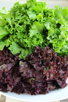 Free Lettuce Green Salad Royalty Free Stock Photo - 15858515