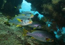 Free Groupers Stock Images - 15858704