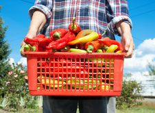 Free Fresh Vegetable In Basket Stock Image - 15859101