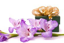 Free Beautiful Gladiolus And Gift Box Royalty Free Stock Photos - 15859318