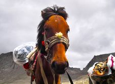 Free A Horse Under Kailash Royalty Free Stock Image - 15859386
