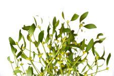 Free Mistletoe On White Background Royalty Free Stock Image - 15859486
