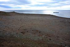 Free Magellan Penguins On An Island Royalty Free Stock Image - 15859956