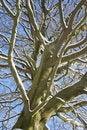 Free Winter Tree Royalty Free Stock Photography - 15862977