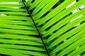 Free Palm Leaf Stock Photo - 15864130