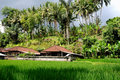 Free Terrace Rice Fields Stock Images - 15864134