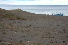 Free Magellan Penguins On An Island Stock Photo - 15860020
