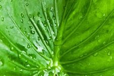 Free Droplet On Green Leaf Royalty Free Stock Images - 15860289