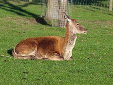 Free Deer Stock Photos - 15860293