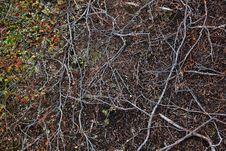 Free Tundra Land Surface Royalty Free Stock Photo - 15860525