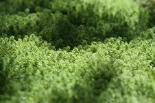 Free Grass Texture Royalty Free Stock Photos - 15861358