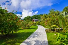Free Pathway In Tropical Park Stock Photography - 15861542