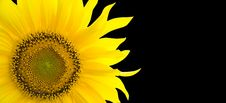 Free Sunflower Background With Place For Your Text Stock Image - 15861771