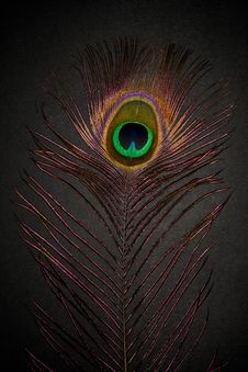 Free Peacock Feather Royalty Free Stock Image - 15862136