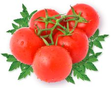 Free Tomatoes With Leaves Royalty Free Stock Photo - 15862765