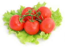 Free Tomatoes And Lettuce Royalty Free Stock Photo - 15862805
