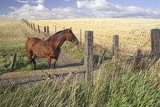 Free Horse In The Field. Royalty Free Stock Images - 15862889