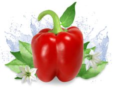 Free Red Pepper With Water Splashes Royalty Free Stock Images - 15862899