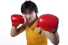 Portrait Of A Boxer Isolated On White Stock Image