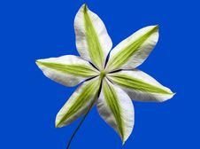 Free Clematis On Blue Royalty Free Stock Image - 15863926