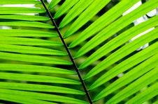 Free Palm Leaf Stock Photo - 15864130