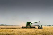 Free Wheat Royalty Free Stock Photo - 15866455