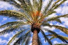 Free Single Palm Royalty Free Stock Images - 15867539