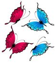 Free Beautiful Butterfly Royalty Free Stock Photos - 15872088