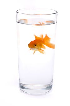 Free Goldfish In A Glass Of Water Stock Images - 15870294