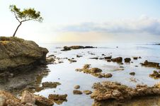 Tree And Sea Royalty Free Stock Images