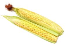 Free Two Cob Of Corn Royalty Free Stock Photography - 15871057