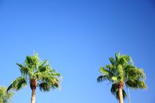 Free Palm Tree Royalty Free Stock Photos - 15871168