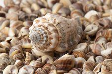Free Seashell Stock Image - 15873671