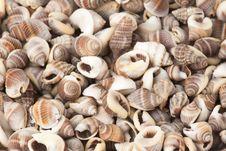 Free Seashell Royalty Free Stock Image - 15873976