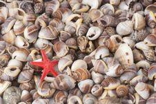 Free Seashell Stock Image - 15874081