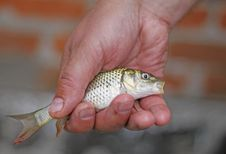 Free Catch Royalty Free Stock Image - 15874186