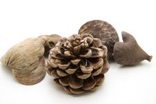 Free Fir Cone Royalty Free Stock Image - 15875876