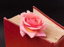 Free Pink Rose Bookmark Royalty Free Stock Photos - 15876658