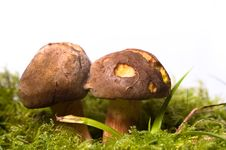 Free Wild Mushrooms Stock Photo - 15876990