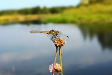 Free Dragonfly Stock Photography - 15877222